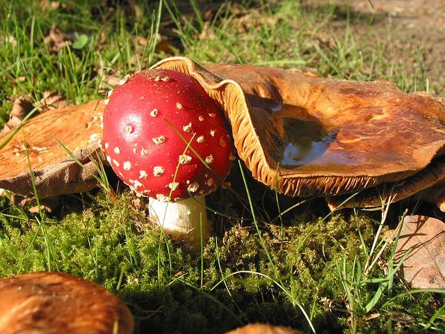 Les champignons 3a8310
