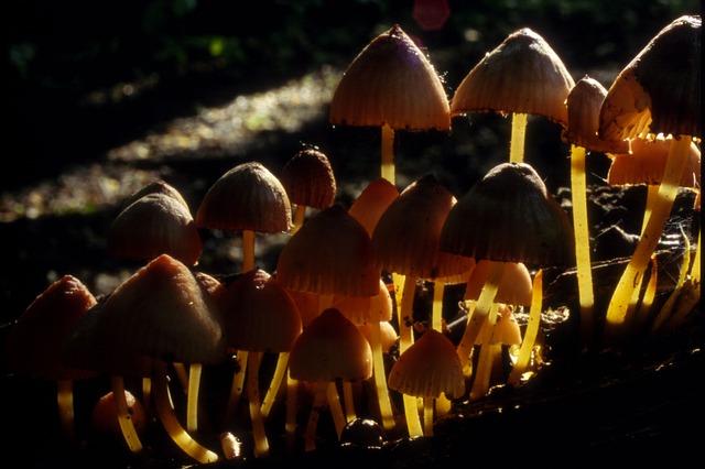 Les champignons  - Page 6 3a9710