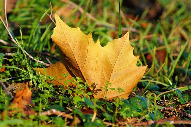 Les feuilles d'automne A20010