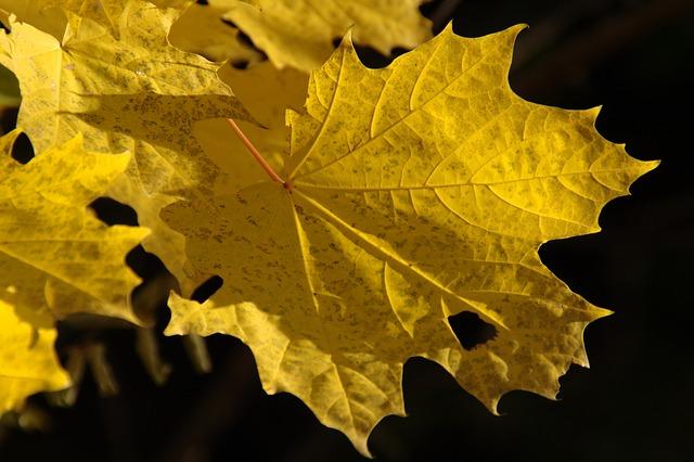 Les feuilles d'automne A20210