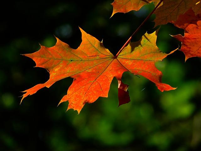 Les feuilles d'automne A20310