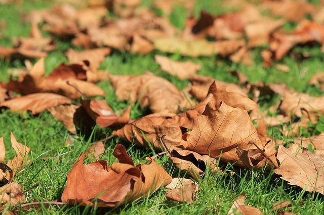 Les feuilles d'automne A20410
