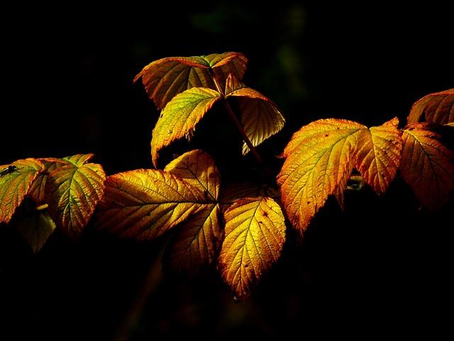 Les feuilles d'automne A20510