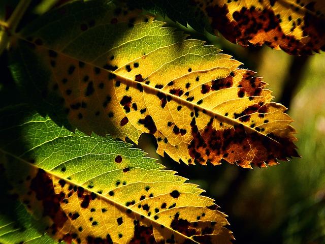 Les feuilles d'automne A20610