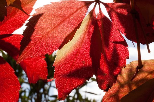 Les feuilles d'automne A20710