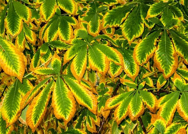 Les feuilles d'automne A20810