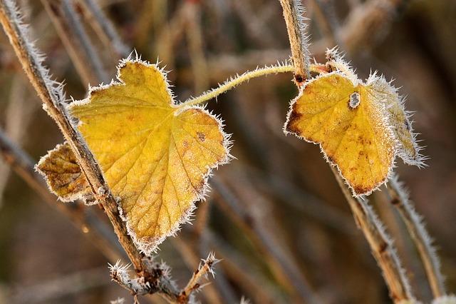 Les feuilles d'automne A20910