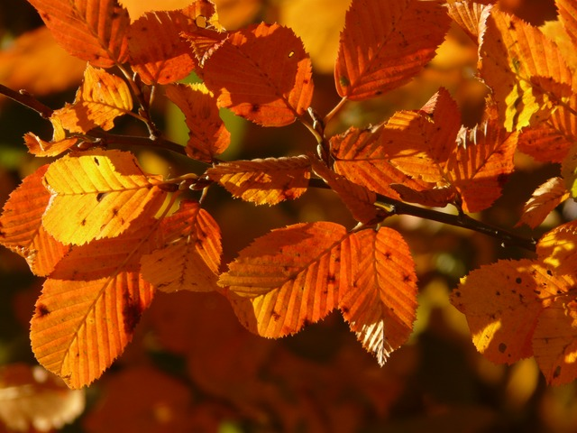 Les feuilles d'automne A21010