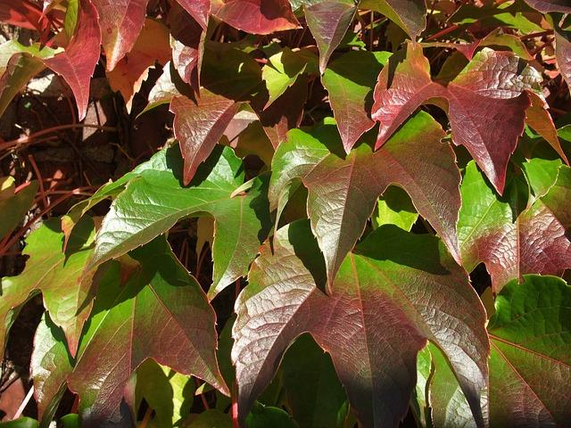 Les feuilles d'automne A21210