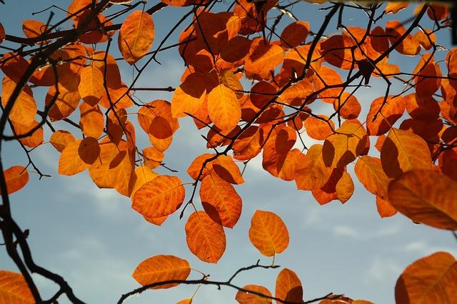 Les feuilles d'automne A21310