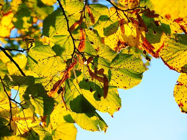 Les feuilles d'automne A21410