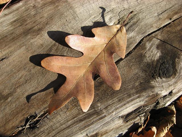 Les feuilles d'automne A21510