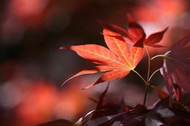 Les feuilles d'automne A21610