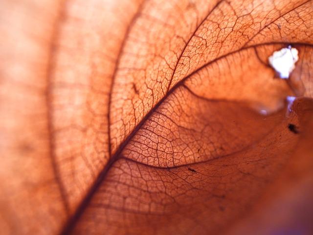 Les feuilles d'automne A21710