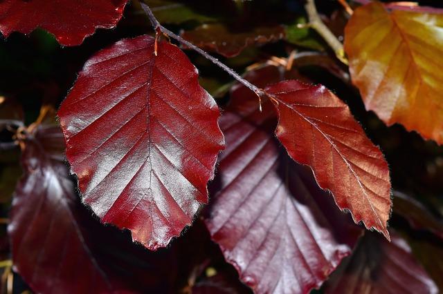 Les feuilles d'automne A21810