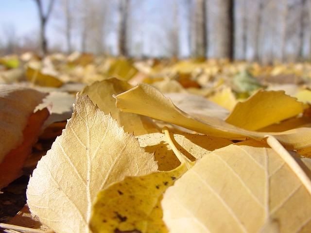 Les feuilles d'automne A21910