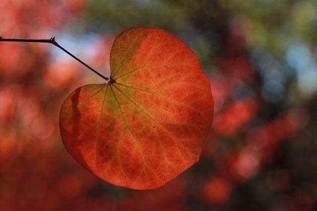 Les feuilles d'automne A22010