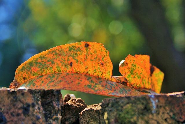 Les feuilles d'automne - Page 2 A22110