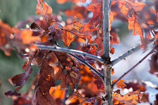 Les feuilles d'automne - Page 2 A22210