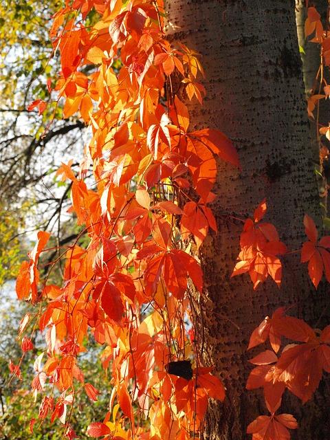 Les feuilles d'automne - Page 2 A22310