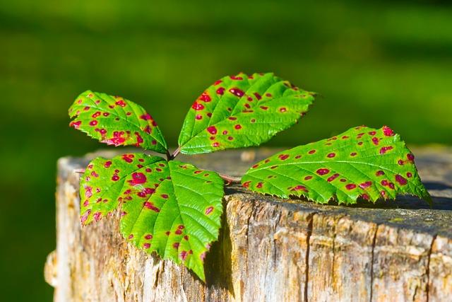 Les feuilles d'automne - Page 2 A22410