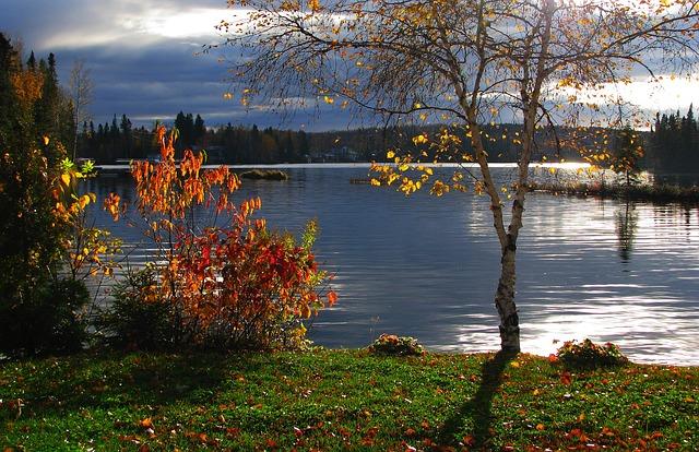 Les feuilles d'automne - Page 2 A22511