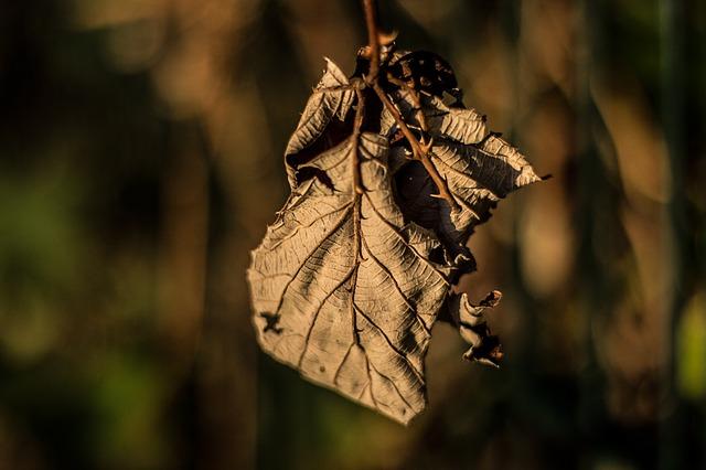 Les feuilles d'automne - Page 2 A22610
