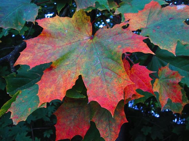 Les feuilles d'automne - Page 2 A22810
