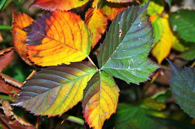 Les feuilles d'automne - Page 2 A22910