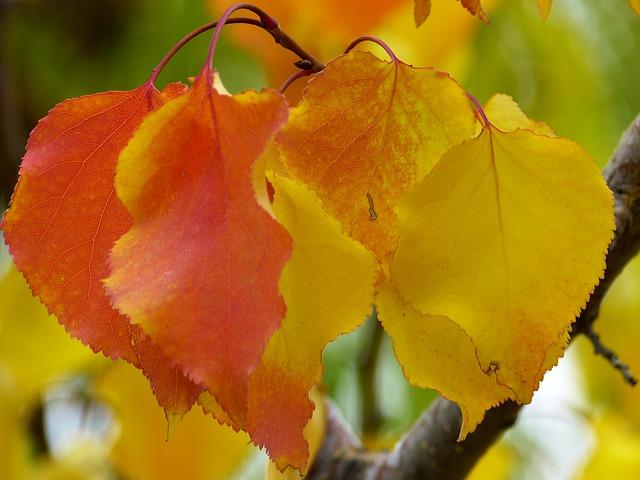 Les feuilles d'automne - Page 2 A23010