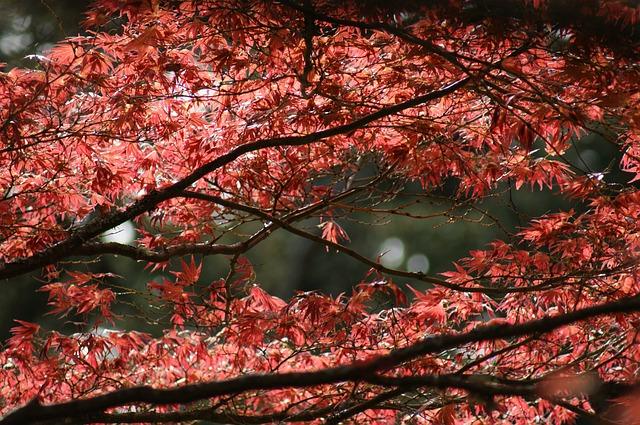 Les feuilles d'automne - Page 2 A23210