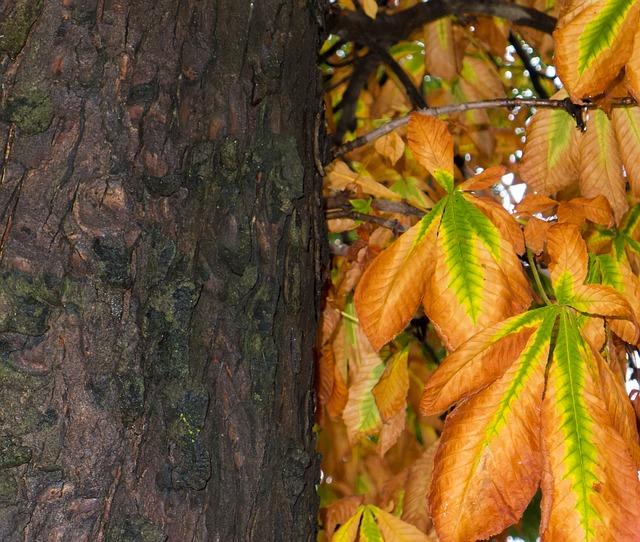 Les feuilles d'automne - Page 2 A23310