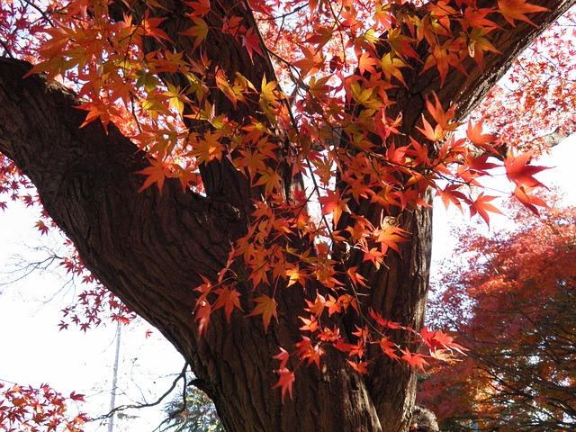 Les feuilles d'automne - Page 2 A23410