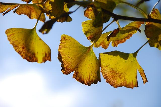 Les feuilles d'automne - Page 2 A23510