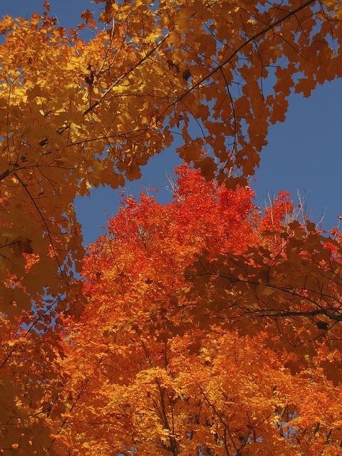 Les feuilles d'automne - Page 2 A23710