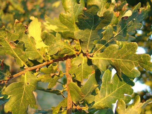 Les feuilles d'automne - Page 2 A24010
