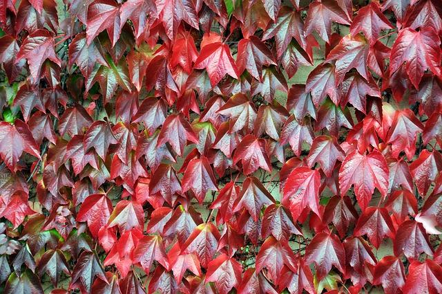 Les feuilles d'automne - Page 2 A24110