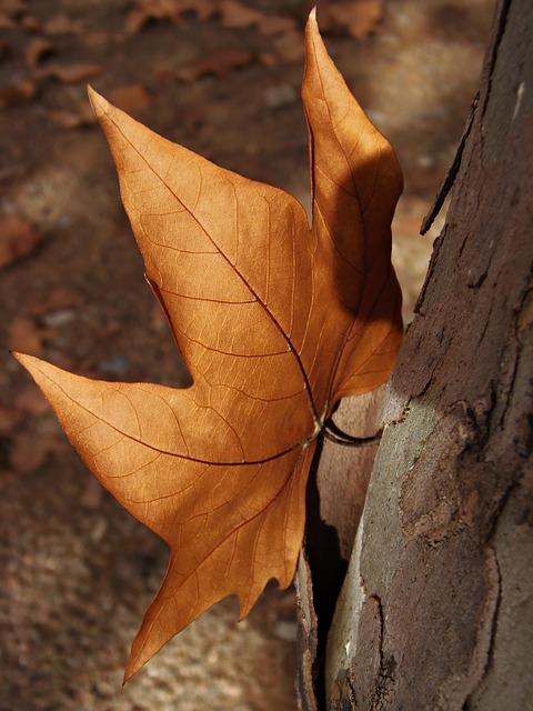 Les feuilles d'automne - Page 2 A24210