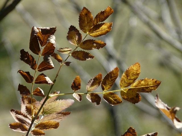Les feuilles d'automne - Page 2 A24310