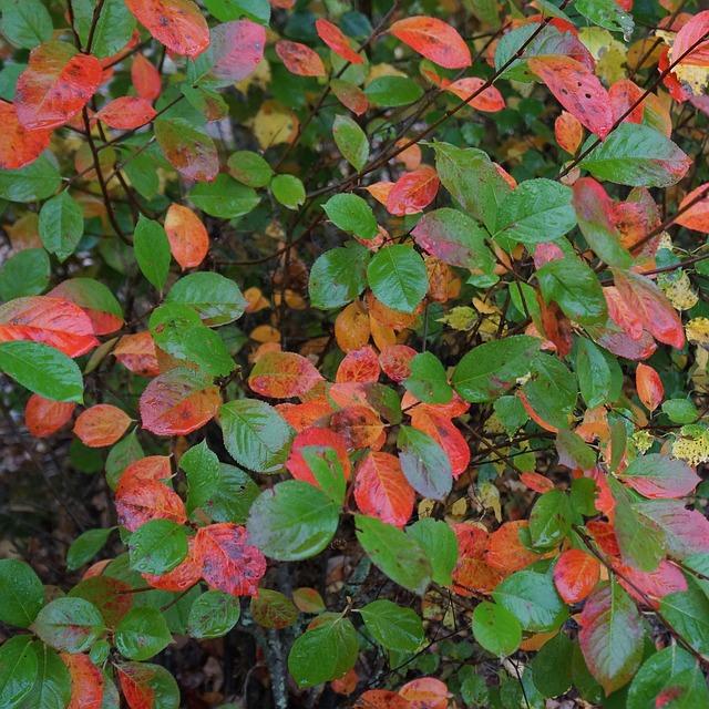 Les feuilles d'automne - Page 2 A24510