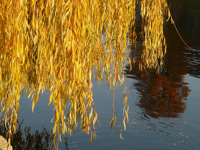 Les feuilles d'automne - Page 2 A24610