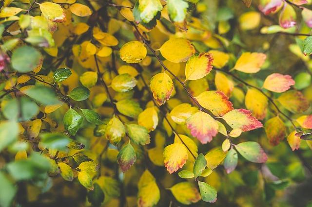 Les feuilles d'automne - Page 2 A24810