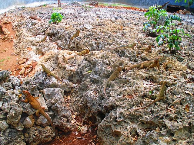 Les roches, les pierres ... - Page 2 D55210