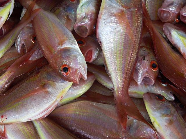 Les poissons en général - Page 2 E75110