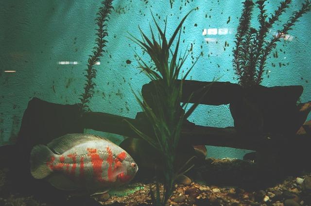 Les poissons en général - Page 2 E75410