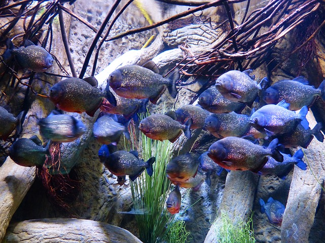 Les poissons en général - Page 2 E76010
