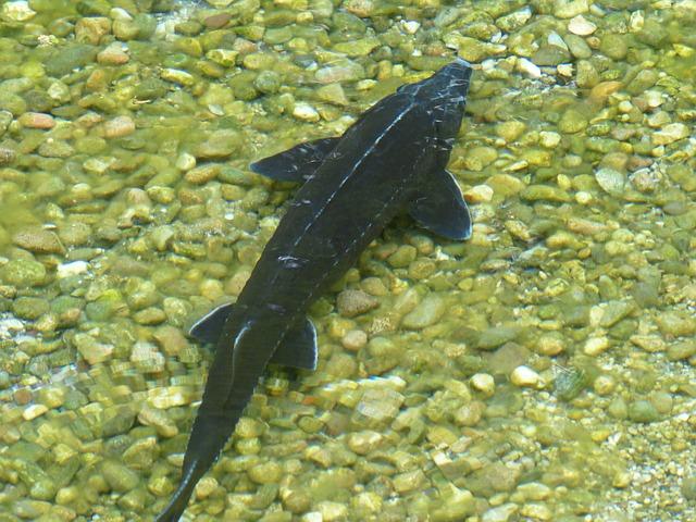 Les poissons en général - Page 3 E78310