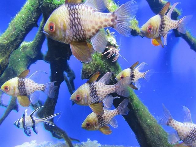 Les poissons en général - Page 3 E79910