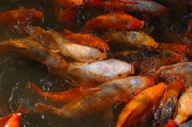 Les poissons en général - Page 3 E80810