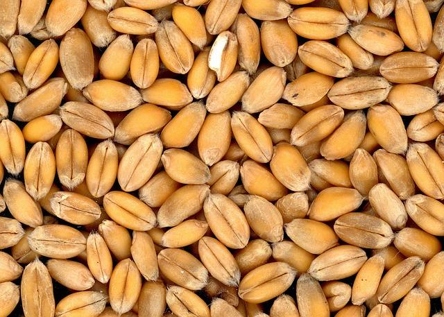 Le blé F1410